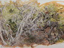 MEET THE ARTISTS <br/> Retracing Bundjalung National Park