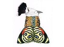 BIRDMAN <BR>Jasmine Scheidler